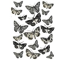 Moths on fly b&w vintage 1920's design! Photographic Print