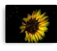 Light Up The Sunflower Canvas Print