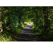 Summer Forest Road Photographic Print