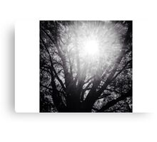 Tree of Knowledge with Sun Beaming Thru Canvas Print