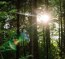 Sunlight Forest by PatiDesigns