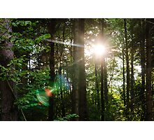 Sunlight Forest Photographic Print