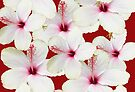 HIBISCUS by Thomas Barker-Detwiler