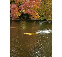Rainbow Trout Autumn the Salmon Ponds, Tasmania Photographic Print