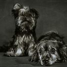 Giz and Lucy by Pene Stevens