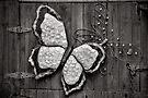 Butterflies - B&W by PhotosByHealy