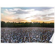 Cotton Field 11 Poster