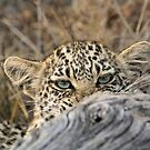 I am hiding from you! by jozi1