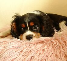 Charlie at 3 months old by AnnDixon