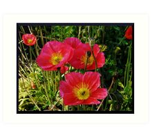 Pink Pops of Poppies Art Print