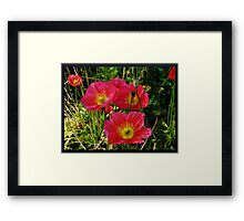 Pink Pops of Poppies Framed Print