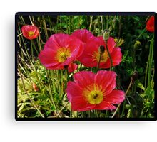 Pink Pops of Poppies Canvas Print