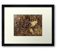 Brown Calcite Moss Framed Print