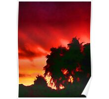 Weeping Tree Silhouette against the Sunset 1 Poster