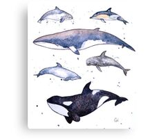 Whales and Dolphins of Britain Canvas Print