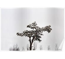 Lonely tree in snowy forest Poster