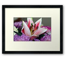 Exquisite lily Framed Print