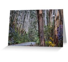 Road to Mt Irvine - Spring 2014 Greeting Card