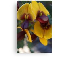 egg and bacon flower Canvas Print