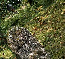 5.9.2014: Forgotten Cemetary by Petri Volanen