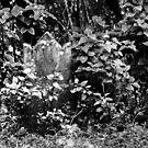 5.9.2014: Forgotten Tombstone by Petri Volanen