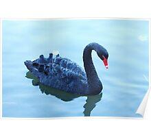 black beauty swimming Poster