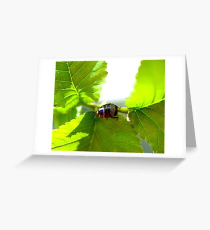 Small Patterned Bug Greeting Card