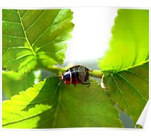 Small Patterned Bug Poster