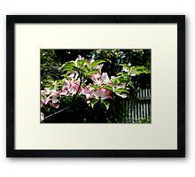 Springtime Blooming Dogwood Framed Print
