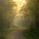 Misty Frozen Sunshine Morning by ienemien