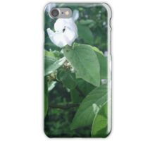 fruit tree iPhone Case/Skin