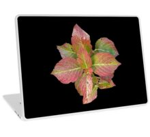 Red leaves in Fall/Autumn Laptop Skin