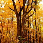 A Golden Autumn Day by Debbie Oppermann