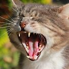 Close-up of tabby cat yawning by turniptowers