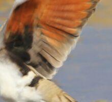 Blur of Flight - Namaqua Dove - African Wildlife Sticker