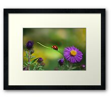 Single in Search Framed Print