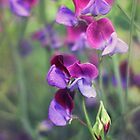 pretty sweet peas by Jo Williams