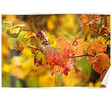 Autumn at the Vineyard Poster