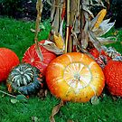 Fall harvest by Arie Koene