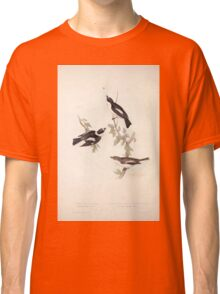 John Gould The Birds of Europe 1837 V1 V5 063 Pied and White Collared Flycatcher Classic T-Shirt