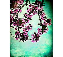 As blossoms bloom Photographic Print