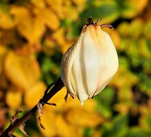Yucca In Autumn by Susie Peek