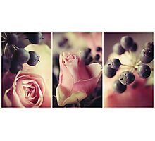 Pink and Black in Vintage Hues. Photographic Print