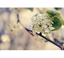 Vintage Blossom Photographic Print