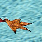Floating Leaves by Heather Friedman