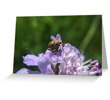 Tribu d'insectes profitant du soleil - Photo n°3 Greeting Card