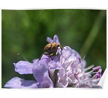 Tribu d'insectes profitant du soleil - Photo n°3 Poster