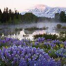 Teton Lupine by David Kocherhans