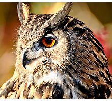 Eurasian Eagle Owl Photographic Print