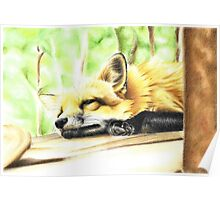 Sleepy fox Poster